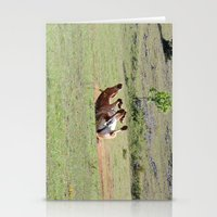 Rolling Horse Stationery Cards