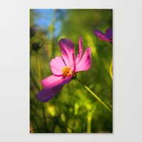 Cosmos Flower Photography Close up Sunlight Green summer Nature Organic Canvas Print