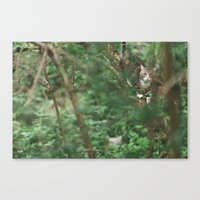 Cat in green Canvas Print