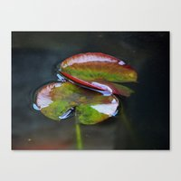 Lily Pads Canvas Print