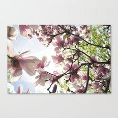 Magnolia Magic Canvas Print