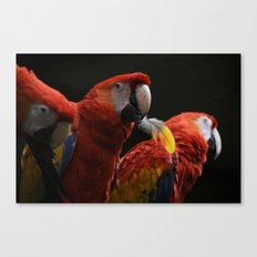 Bird with a Feather Canvas Print