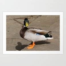 Duck with Attitude Art Print