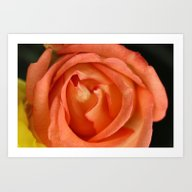 Softly Apricot Art Print