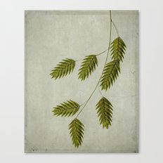 oat grass Canvas Print