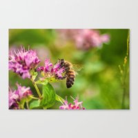 Busy at Work Canvas Print