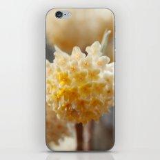 Bells of Spring iPhone & iPod Skin