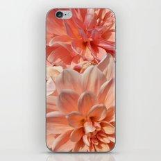 Dhalia iPhone & iPod Skin