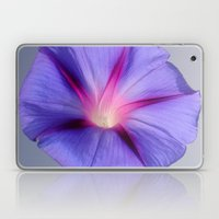 Close Up of A Morning Glory Purple and Pink Flower Laptop & iPad Skin