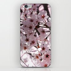 Sakura in Kyoto iPhone & iPod Skin
