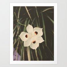 Little White Art Print