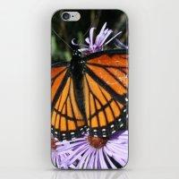 Viceroy iPhone & iPod Skin