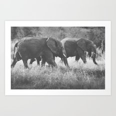 Grazing Elephants Art Print