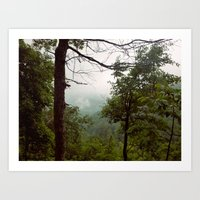 Smoky Mountains Tennessee Tree Color Photograph Art Print