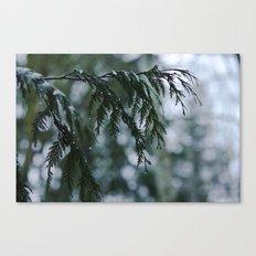 Winter Rain Canvas Print