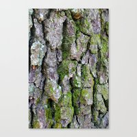 Mossy Oak Canvas Print