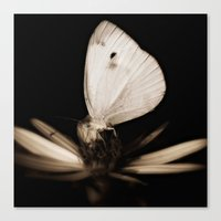 Paperwhite Canvas Print