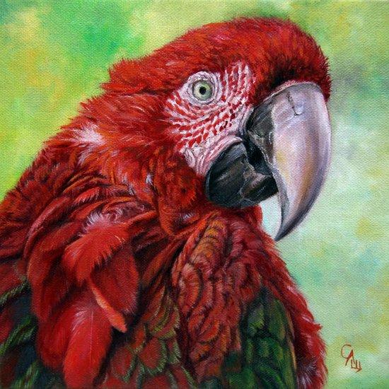 Ara  macao oil5013 Canvas Print