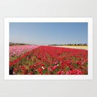Flower Fields Art Print