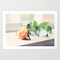 Rose by the Window Art Print
