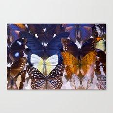 Farfalle II Canvas Print