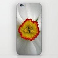 narcissus bloom macro VII iPhone & iPod Skin