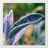fly on Stachys leaf Photography - Nature - Garden - Plant  Canvas Print