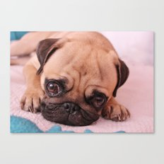 Pug Before Nap Canvas Print