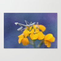 Praying for a Good Lunch Canvas Print