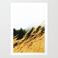 Amber Waves Art Print