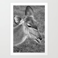 Zoo series no.2 Art Print