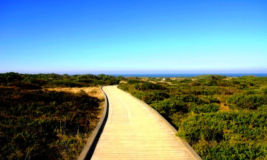 Path to the Great Southern Ocean Art Print
