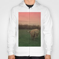 Scottish Highland Steer Hoody