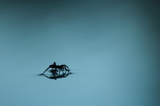 spider. Art Print