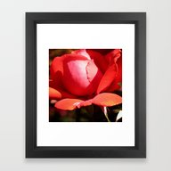 Framed Art Print featuring The Subject Is Roses - 1… by Brown Eyed Lady