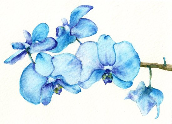 Blue Orchids Two - Watercolor Art Print
