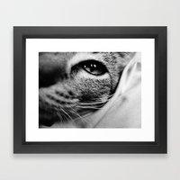 uschi the cat Framed Art Print