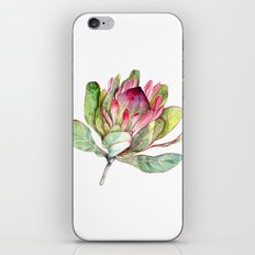 Protea Flower iPhone & iPod Skin