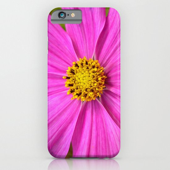 pink cosmos I iPhone & iPod Case