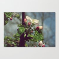 Canvas Print featuring in spring by Ioana Stef