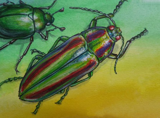 Shinny Beetle Art Print