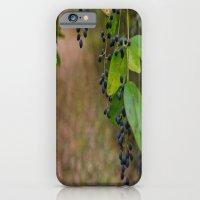 Winter Berries iPhone 6 Slim Case
