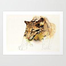 Clouded Panther Art Print