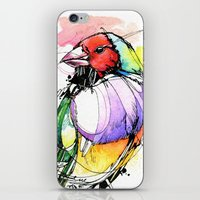 Red Lady Gouldian Finch iPhone & iPod Skin