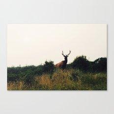 Prairie Creek Elk Canvas Print