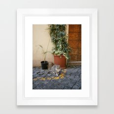 roman cat Framed Art Print