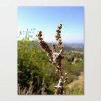 Brown 3 Leaf Weed Canvas Print