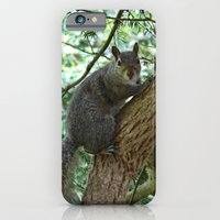 iPhone & iPod Case featuring Grey squirrel (oil painting effect) by Shalisa Photography