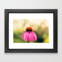 Pink Coneflower Framed Art Print