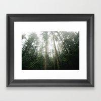 Trees In Olympic Nationa… Framed Art Print